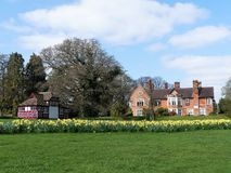 Daffodil beds at the Chorleywood House Estate royalty free stock images