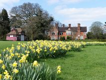 Daffodil beds at the Chorleywood House Estate stock image
