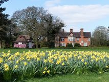 Daffodil beds at the Chorleywood House Estate royalty free stock photo