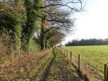 Tree lined path beside farmland in winter, Chorleywood stock images