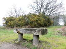 Wooden seat with gorse plant behind, Chorleywood Common stock image
