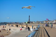 Seagull overpasses a Blackpoole beach. This photo was taken in the city Blackpool in July 2017 Royalty Free Stock Photos