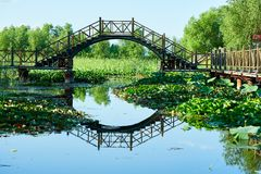The bridge on the lotus pond Royalty Free Stock Image