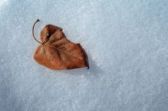 Falling leaf on the snow royalty free stock photography