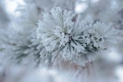 White winter frost nature background stock photo