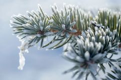 White winter frost nature background royalty free stock image