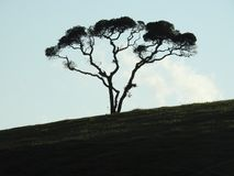 Silhouette tree at evening time Stock Photos