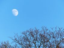 Moon visable above trees during daytime stock photos