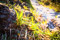 The photo was taken in Lantau Peak. Grass in Lantau Peak Stock Photo