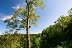 A summer tree and blue sky. The photo was taken in Mount Phoenix scenic area Wuchang city Heilongjian province, China Stock Photos