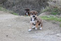 An two litttle dog in Bulgaria - best frient of people royalty free stock images