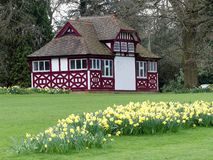 Daffodil beds by The Summerhouse, Chorleywood House Estate stock image