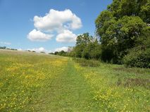 Pathway in the Chess Valley area of the Chiltern Hills stock images