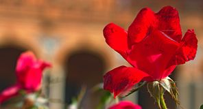 A red flower in the city stock image