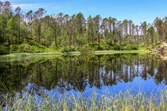 Summer Landscape with Green Pine Forest and Blue Sky Reflected in Lake on The Top of Mountain royalty free stock photography
