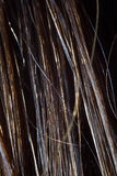 Photo of the wet human hair Stock Photography