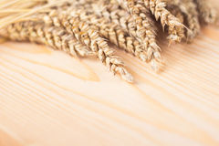 Photo of wheat in a studio Royalty Free Stock Images
