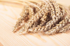 Photo of wheat in a studio Stock Images