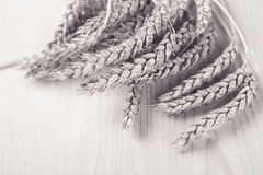 Photo of wheat in a studio Stock Photo