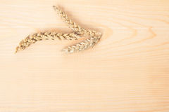 Photo of wheat in a studio Royalty Free Stock Photo