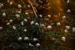 Photo of White Flowers Stock Photo