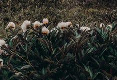 Photo of White-and-orange Petaled Flowers Royalty Free Stock Image
