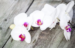 Photo of white orchid on vintage wooden background Stock Photo