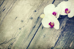 Photo of white orchid on vintage wooden background Stock Photography