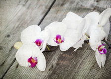 Photo of white orchid on vintage wooden background Stock Images