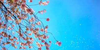 Photo of White and Red Petal Flower Under Blue Sky Stock Photos