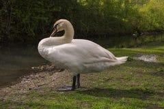 Image result for swan river bank