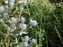 Photo of wild flowers. Beautiful royalty free stock image