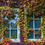 Photo of Window With Vine Plants royalty free stock photography