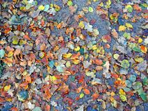 Winter autumn fall leaves background colours weather stock photo