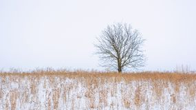 Photo of winter tree with field covered by snow Royalty Free Stock Image