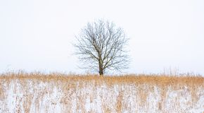 Photo of winter tree with field covered by snow Stock Photos