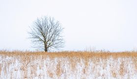 Photo of winter tree with field covered by snow Royalty Free Stock Photography