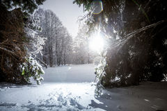 Photo of winter siberia forest at sun rays Stock Images