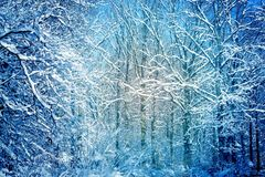 Photo of a winter wonderful forest. Photo of a winter snow-covered wonderful forest Royalty Free Stock Photography