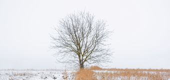 Photo of winter tree with field covered by snow Royalty Free Stock Photo
