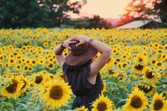 Photo of Woman in Black Dress Standing on Sunflower Field royalty free stock photo