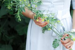 Photo of Woman Holding Green Plant. royalty free stock images