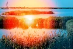 Photo of wonderful swans Stock Photography