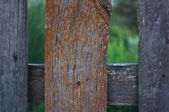 Photo of wooden fence in summer garden. Photo backround of garden fence from wooden planks with bright moss Stock Photography