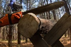 Chainsaw laying on wood log. Photo of a worker hand holding orange chainsaw laying on a wood log on forest background Stock Images