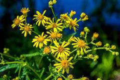 Photo of yellow flowers near blue lake. Photo of beautiful yellow flowers near blue lake at summer Stock Images