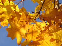 Photo of Yellow Leaves Under Sunny Day Royalty Free Stock Photos