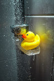 Photo of yellow rubber duck under douche Stock Photo