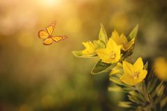 Photo of yellow wildflower and butterfly Stock Images