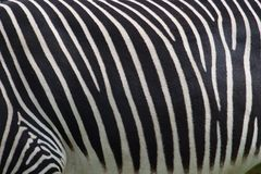 Photo of a zebra texture Stock Photo